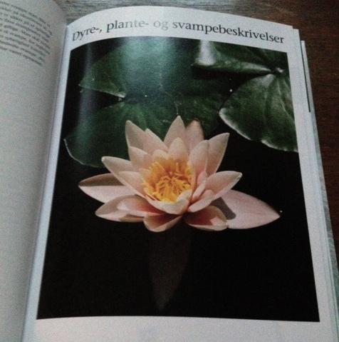 Billede 7